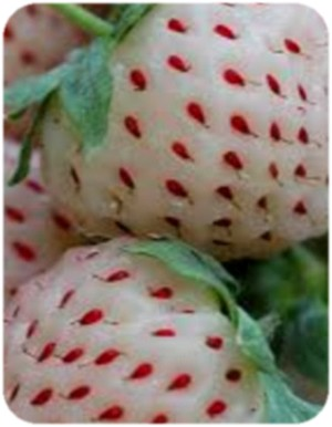 Pineberry__az_An_52d549cf9e4bc.jpg